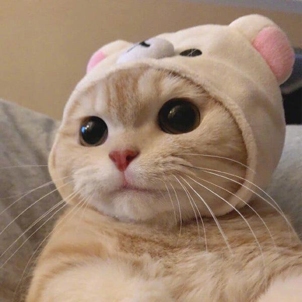 20210423_122851_Funny-kucing.jpg
